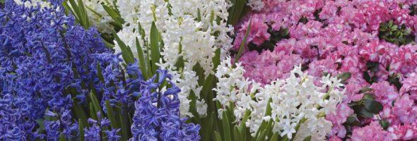 Несколько видов различных довольно ароматных цветов