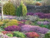 Веросковый сад