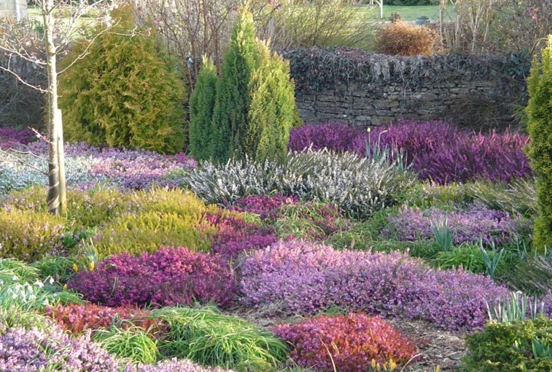 Шотландское чудо, или Вересковый сад своими руками