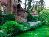 Хвойные растения от Landscape.ua для идеального дизайна