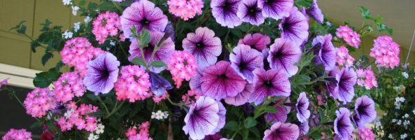 Ампельные растения: выбор и уход за ними