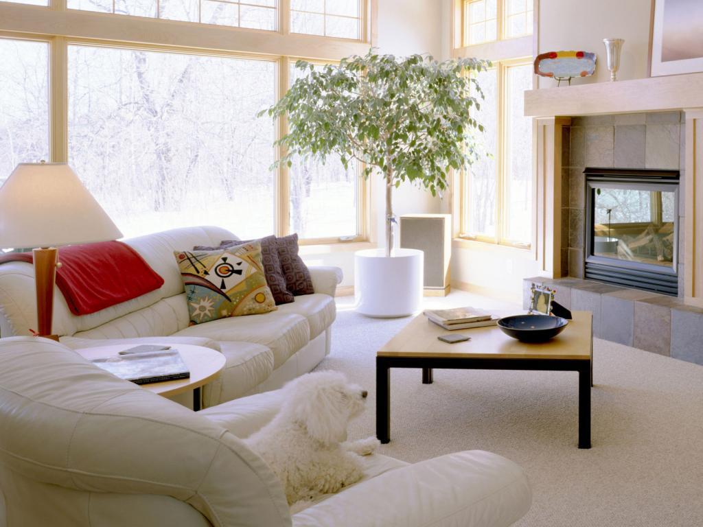 Комфортная и уютная атмосфера с комнатными растениями от Greensad