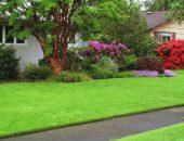 Выбираем газон для своего сада