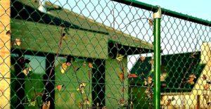 Листья застряли в заборе из сетки-рабицы
